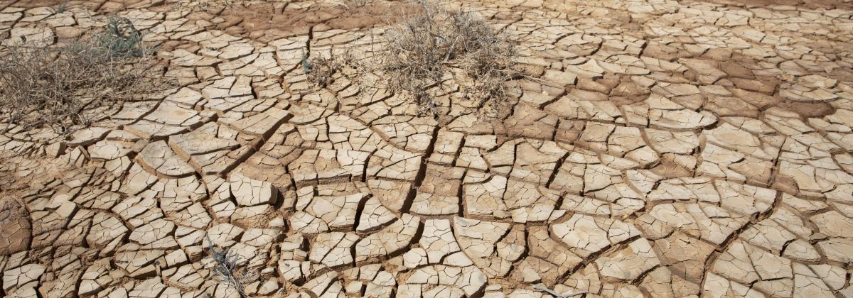 Ilmastokriisi: Lapset kohtaavat isovanhempiaan synkemmän tulevaisuuden